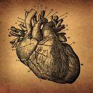 Framed Photo. Human Heart Engraving