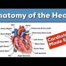 Anatomy of the Heart: Structures and Blood Flow [Cardiology Made Easy]