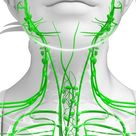 Signs Of A Clogged Lymphatic System And Ten Proven Ways To Cleanse It - Healing the Body