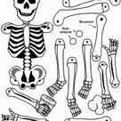 Lessen skelet