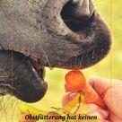 Obst und Gemüse füttern!