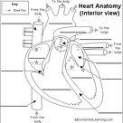 Label Heart Anatomy Diagram Printout