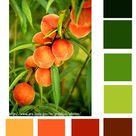 Peach Color Palettes