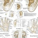 Acupressure Reflexology Chart With Precise Hand Diagrams. Professional Print.