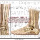 Nerve Pathway Medical Illustration