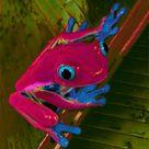 Blue Eyed Tree Frog by 75frogger on DeviantArt