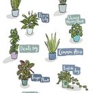 10 Easy Houseplants For Any Home