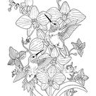 Adult Coloring Page - Hummingbirds and Orchids Digital Download - Punch Needle Pattern