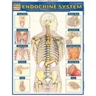 Endocrine System : Quickstudy Laminated Anatomy Reference Guide (Book) - Walmart.com