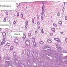 Ovary and Follicle Development