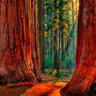 The California