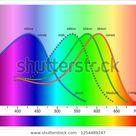 Vector de stock (libre de regalías) sobre Color Sensitivity Cones Vs Rods1254489247