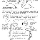 How To Draw A Flamingo Worksheet and Lesson