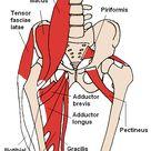 Hüftbeuger dehnen gegen Rückenschmerzen : Vermeide diesen Fehler!