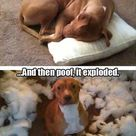 Funny Pics Of Dogs