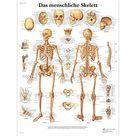 das Atmungssystem Lehrtafel  Anatomie 50 x 67cm Poster • EUR 9,85
