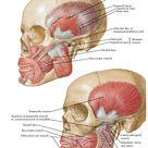 PTERYGOPALATINE FOSSA : Anatomy , Arterial supply , Venous Drainage , Nerve Supply , Radiology - Dental Science