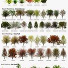 Plants For Garden