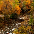 Take a Fall Foliage Trip to Florida? - New England fall foliage