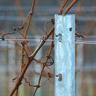 Drahtrahmen für Wein, Himbeeren, Brombeeren und Spalierobst