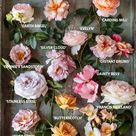 Your Ultimate Guide to Cultivating Gorgeous Roses, According to a Flower Farmer Who Grows Them for a Living