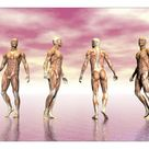 A1 Poster. Male muscular system from four points of view, pink