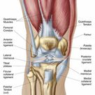 1000 Piece Puzzle. Anatomy of human knee joint
