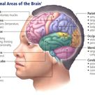 Traumatic Brain Injury: An Insider's Introduction
