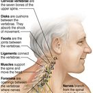 Know Your Neck: The Cervical Spine