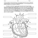 4 Best Printable Heart Diagram To Label
