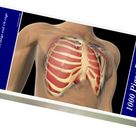 1000 Piece Puzzle. Cutaway view of human lungs and rib cage