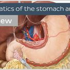 Lymphatics of the stomach and liver (preview) - Human Anatomy  Kenhub