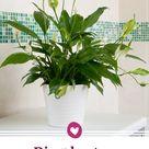 Badezimmerpflanzen: Die 5 Pflanzen sind perfekt geeignet