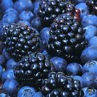 Blue Fruits