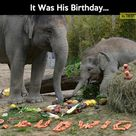 Elephant Birthday Parties