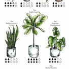 How to Care for Indoor Plants   Collective Gen