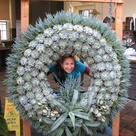 Huge Succulents