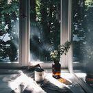 Plant light apothecary bottles