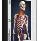 Human upper body showing bones, lungs and circulatory system. 1000 Piece Puzzle. Human upper body showing bones, lungs and circulatory system.