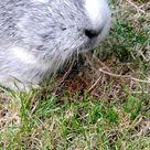 clover gives my phone a kiss