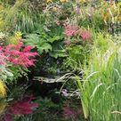 Iris Plants in a Waterlogged Garden