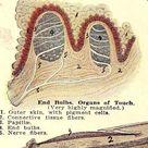 Dermatology Medical Chart  Skin Human Anatomy 1920 Vintage Color Lithograph To Frame