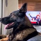 He adopted an old police dog..wait for it