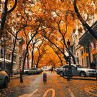 31 Free Amazing Fall iPhone Wallpapers