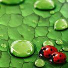 Bug life **We Offer Custom Picture #Framing, #ArtRestoration & #Art Gallery! Tweet Us: www.twitter.com/... Like us on FB: www.facebook.com/... Our Home: www.AFrameofArt.com