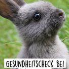 Gesundheitscheck bei Kaninchen
