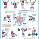 Weight Training Posters Barbell Dumbbell Exercise Charts