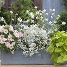 7 tolle Pflanzideen für Blumenkästen und Kübel
