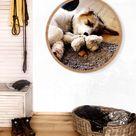 Dein Hund im runden Bilderrahmen - 40cm / Birke / 50mm