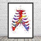 Sternum, Breastbone, watercolor sternum, anatomy art, human skeleton, chest bones, ribs coastal, cartilage with sternum, skeletal system